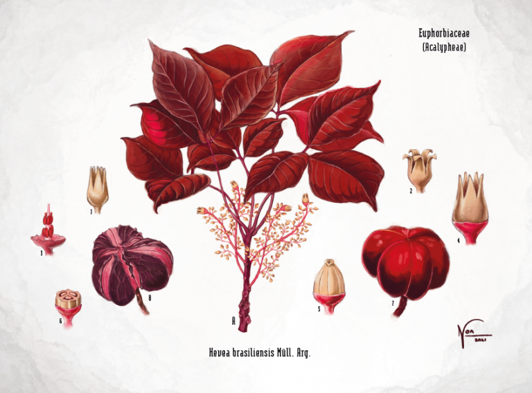 Wat is natuurrubber? | RIS Rubber